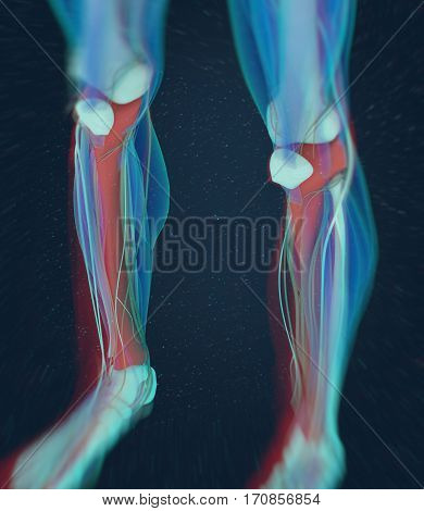 Human anatomy, male Tibia. Shin bone. 3D Illustration.