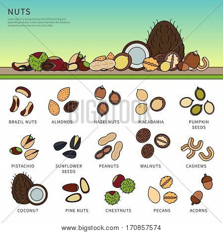 Thin line flat design of the nuts on the table. Healthy eating and vitamins concept. Set of different nuts, almonds, macadamia, pistachio, coconut and others isolated on white background