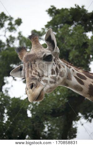 What did you say?!  Houston, Zoo, Houston, Texas
