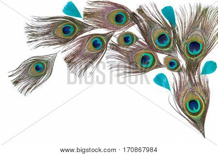 Group of green bright peacock feathers on the white background, lying flat, arc composition, top view, horizontal format