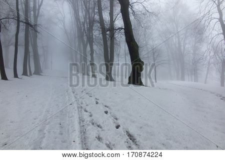 fog on a winter day in the park