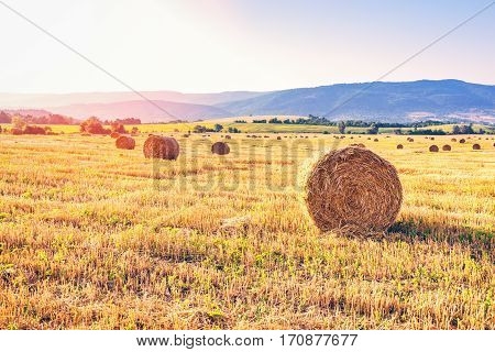 Field of hay bales. Harvesting at the end of the summer.