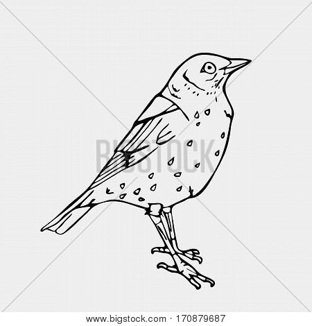 Hand-drawn pencil graphics, bird, lark, oriole, chickadee, sparrow, blackbird, nightingale, finch, bunting, hangbird, goldfinch, raven, magpie, woodpecker, canary, bullfinch, siskin. Engraving, stencil style. Black and white logo, sign, emblem, symbol. St