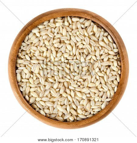 Processed pearl barley in wooden bowl. Uncooked pearled barley without hull and bran. Hordeum vulgare, a major cereal grain. Isolated macro food photo close up from above on white background.