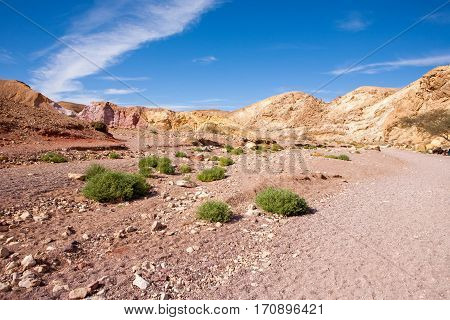 Desert plants at the entrance of Red Canyon tourist attraction in Israel
