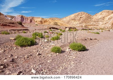 Desert plants at Red Canyon geological attraction in Israel