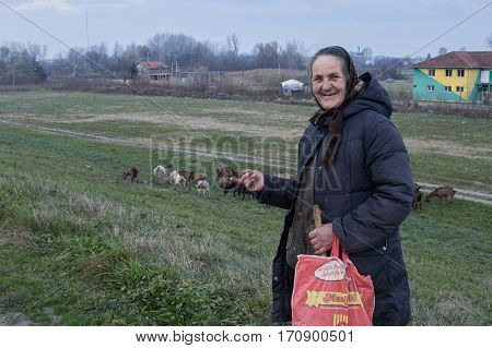 BORCA SERBIA - NOVEMBER 29 2014: Serbian old shepherdess showing her herd of goats