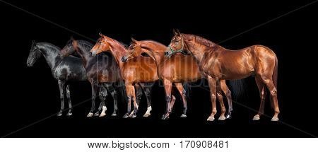 Horses isolated on black. Group of different horses standing on black background.
