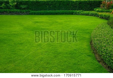 Green lawn with trees planted trust for a fence, landscape design, garden.