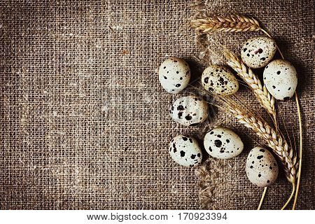 Speckled quail eggs on a rustic background.