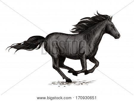 Horse racing on races. Wild black racehorse mustang galloping fast. Horserace sport vector symbol. Equine mare racing in freedom poster