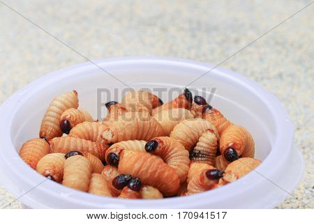 Sago beetle or worm palm weevil red motion in cup on table polished stone (Rhynchophorus ferrugineus) Popular food larva Southern Thailand