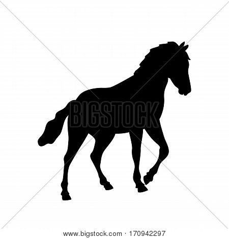 horse vector illustration black silhouette profile side