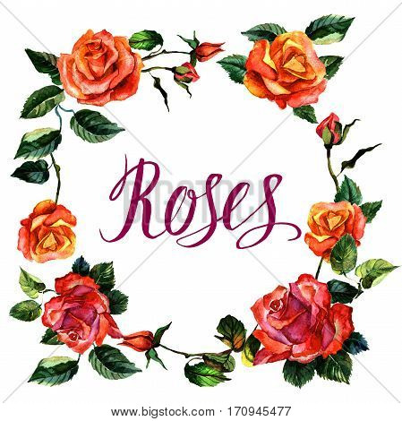 Wildflower rose flower wreath in a watercolor style isolated. Full name of the plant: rose, hulthemia, rosa. Aquarelle wild flower for background, texture, wrapper pattern, frame or border.