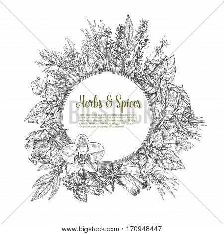 Herbs and spices sketch poster with rosemary, basil, dill, mint, parsley, thyme, vanilla and oregano, ginger and clove, cinnamon and anise, bay leaf, tarragon and round badge with copy space in center