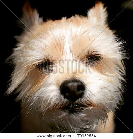 A happy dog squinting it's eyes at the camera.