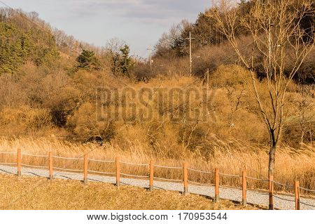 Landscape of a woodland area park with tall grass and trees with a wooden posts and rope fence along side a gravel walkway and a blue sky with fluffy white clouds in the background