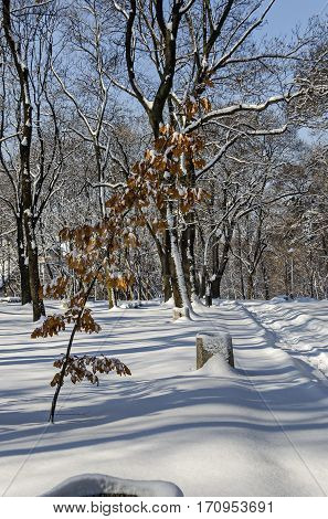 Winter scene with dry tree leafage  in Sofia park, Bulgaria