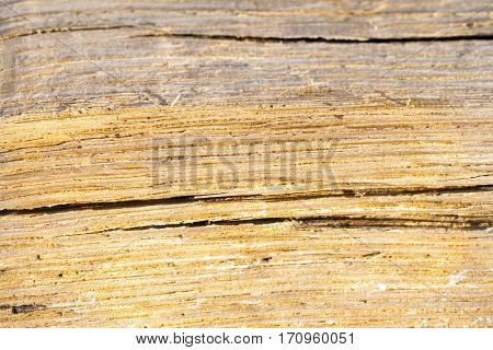 old split with an ax tree with irregular structure. Firewood, photographed close-up. Small depth of field. on wood visible traces of decomposition and destruction of insects