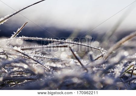 the grass is green, covered with the first frost. Autumn, but not winter. The photo was taken close-up during a dawn, see the ice crystals. Small depth of field.