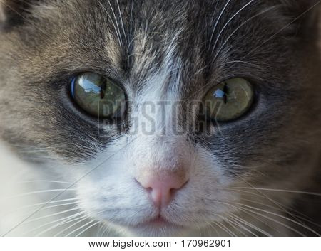 Severe look of a domestic cat on the photographer