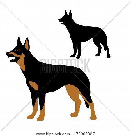 australian kelpie dog vector illustration style Flat