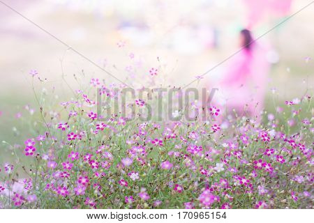 Mini romantic pink spring flowers stock photo