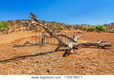 Old wooden branch on sand in desert under the bright sun