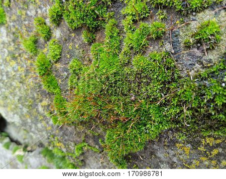 Green moss on a rock in the approximate form