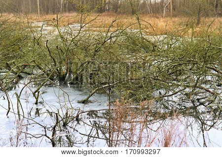 the trees and bushes in the swamp sank