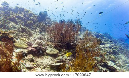 Coral reef and fish in tropical sea underwater