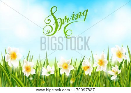 Spring background with daffodil narcissus flowers, green grass, lettering Spring and blue sky.
