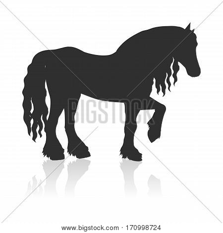 Black draft horse with curly mane vector. Flat design. Domestic animal. Country inhabitants concept. For farming, animal husbandry, horse sport illustrating. Agricultural species. Isolated on white