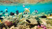 reef with a variety of hard and soft corals and tropical fish poster