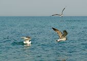 Birds fly with sea and sky at background poster