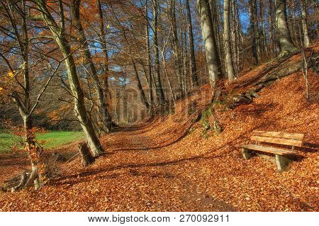 Footpath In Autumn Landscape In Famous Neandertal,north Rhine Westphalia,germany