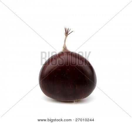 Chestnut edible