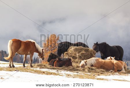 beautiful horses in the mountains in winter