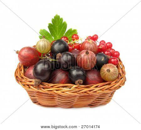 Berries redcurrants gooseberries blackcurrants wild fruits in woven basket