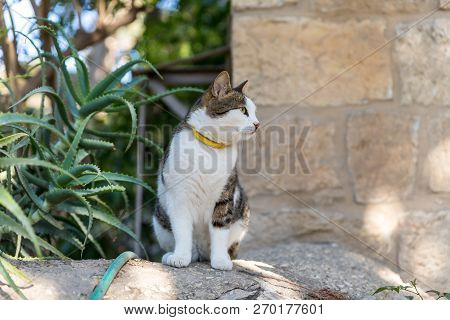 An coloring cat sits on the steps in the inner courtyard of Church of Mary Magdalene in Jerusalem, Israel poster