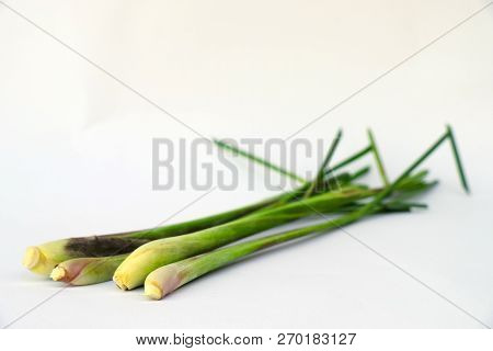 Close Up Isolated Of Fresh Lemon Grass Herbal On White Background Which It Is Thailand And Asian Her