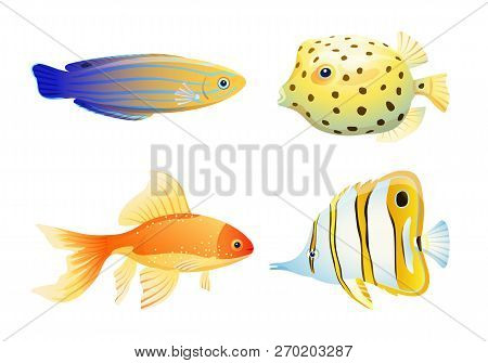 Blue Striped Tamarin Wrasse, Gold And Butterfly, Box Fish. Rare Marine Creature Specie Color Vector