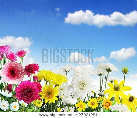 Beautiful Floral Border Flower