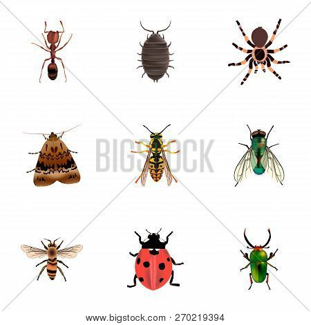 Set Of Bug Realistic Symbols With Bug, Ladybug, Moth And Other Icons For Your Web Mobile App Logo De