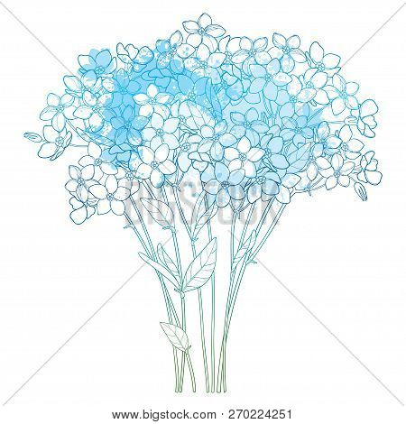 Vector Bouquet With Outline Forget Me Not Or Myosotis Flower Bunch, Bud And Leaf In Pastel Blue Isol