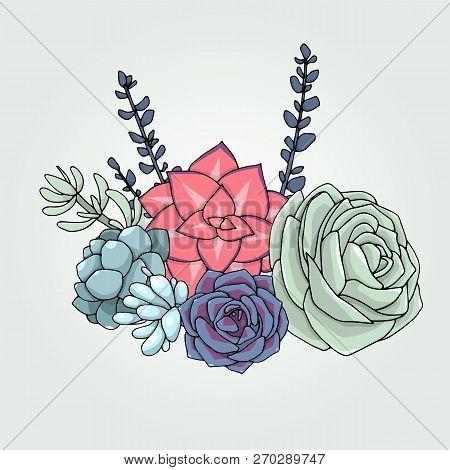 Vector Succulents Floral Composition. Succulent Ornament.  Natural Bouquet. Colored Succulents And C