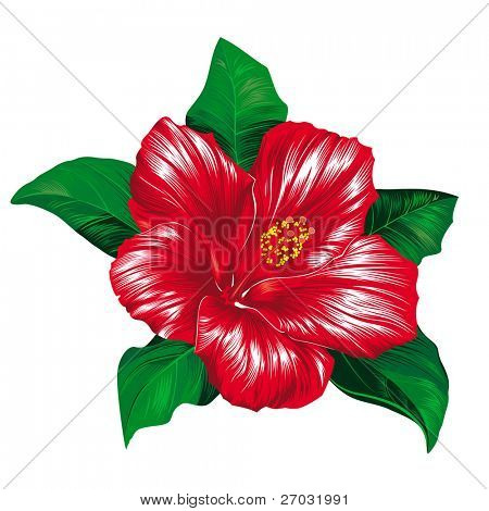 Red hibiscus flower on white background, raster version