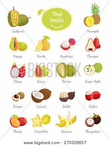 Thai Fruits Set Of Lush Food Vector. Longan And Sugar Apple, Salak And Coconut, Citron And Carambola