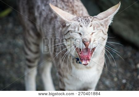 close up image of a cat meowing with copy space poster