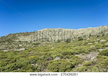 Padded Brushwood (cytisus Oromediterraneus And Juniperus Communis) Next To The Pico Del Nevero (snow